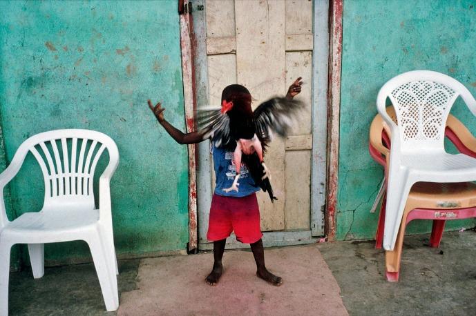 Alex Webb : Un enfant joue avec une poule