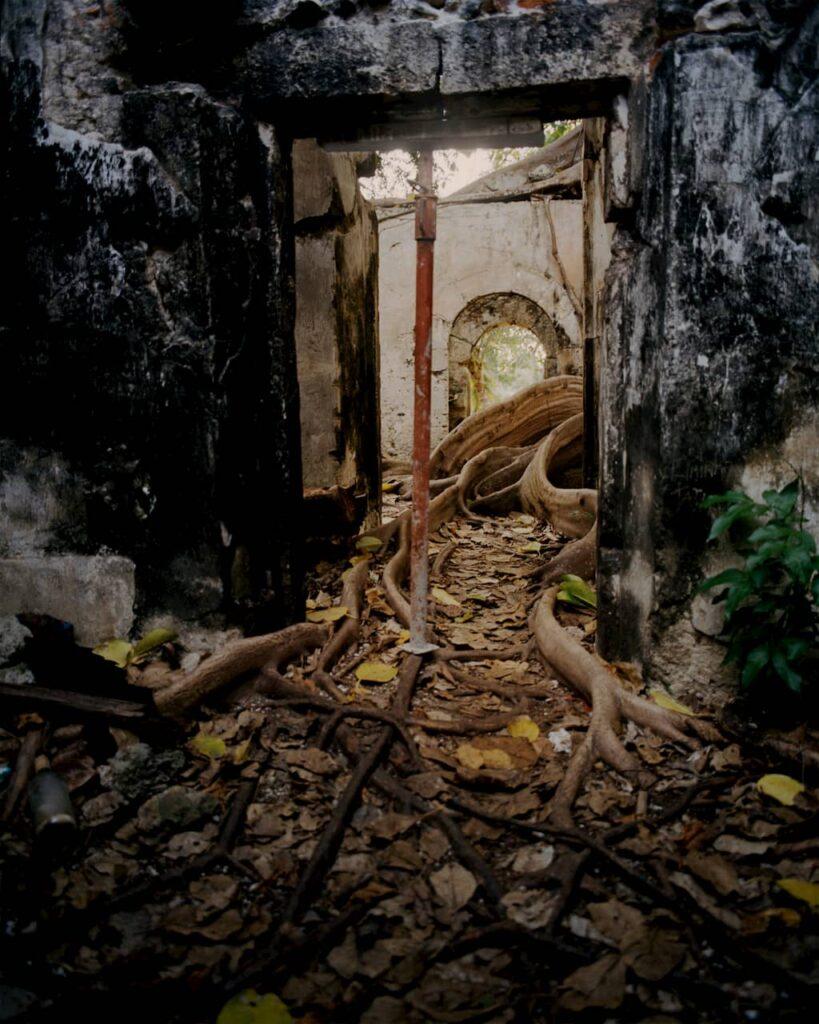 Le figuier maudit à l'intérieur de l'ancienne prison en Guadeloupe photographié par Gregory Halpern